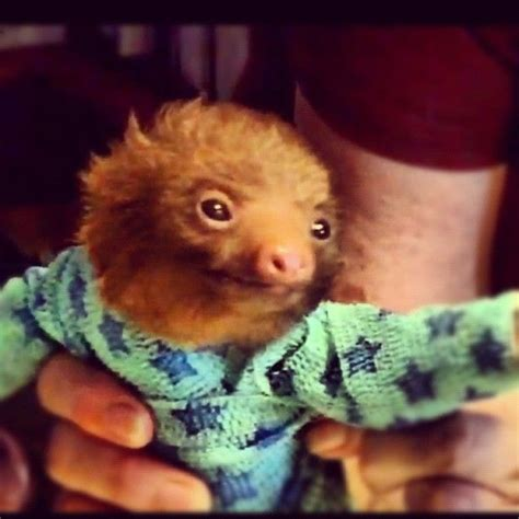 baby sloth in star pajamas - these are the ugliest animals