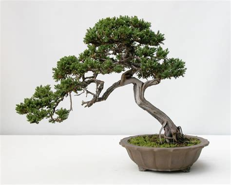 The Art of Bonsai Project - Feature Gallery: The Penjing