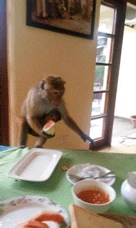 Monkey Steals Food and Runs Away   Gifrific