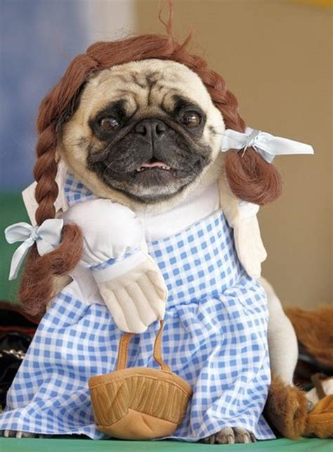 20 Cool Pet Costumes for Halloween 2017