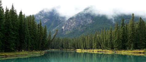 Banff, boreal forest, trees, lake, Canada, generic