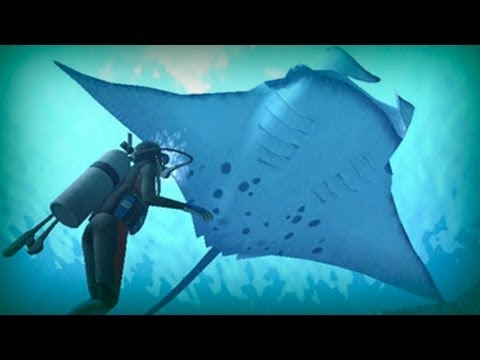 Protect Sharks and Rays in Sabah - Clean Malaysia